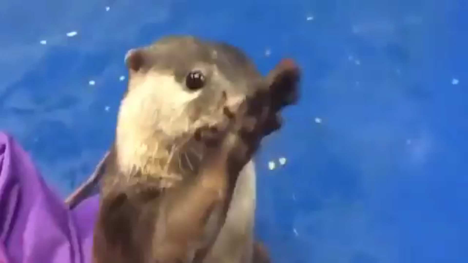 Otter shows how to pet