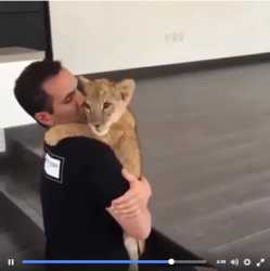 Cute lion cub hug